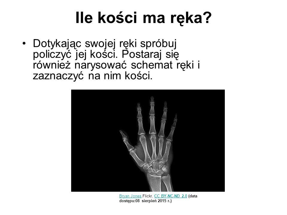 Ile kości ma ręka Dotykając swojej ręki spróbuj policzyć jej kości. Postaraj się również narysować schemat ręki i zaznaczyć na nim kości.