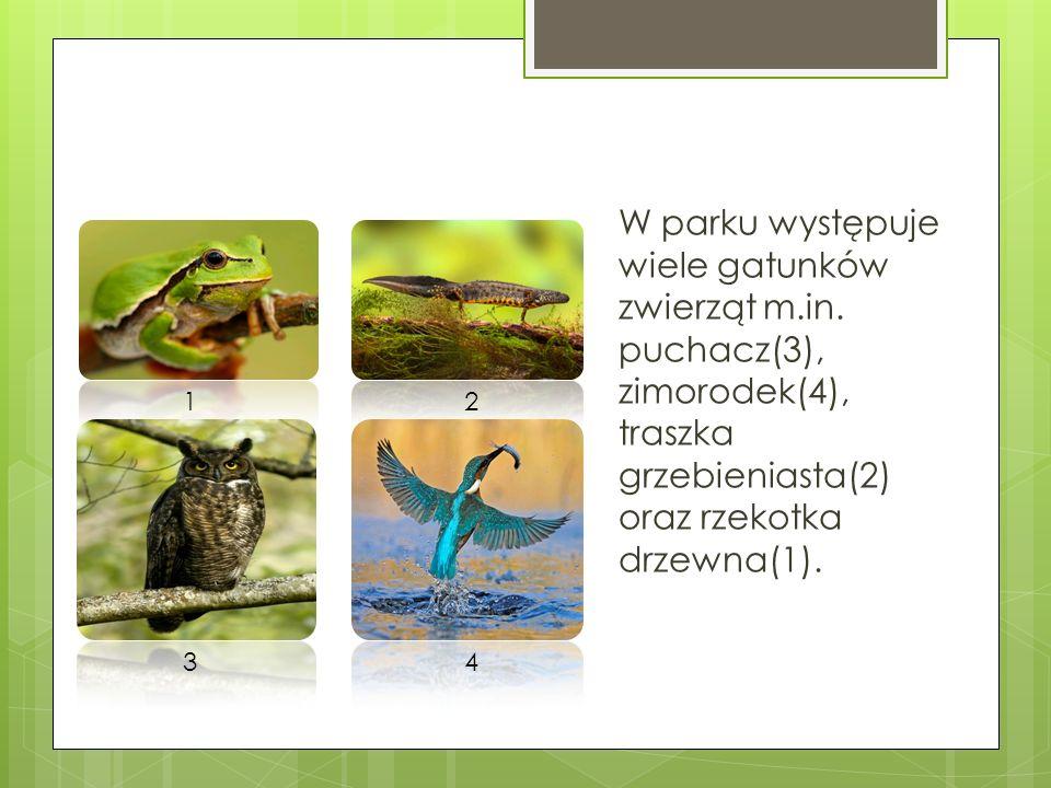 W parku występuje wiele gatunków zwierząt m. in