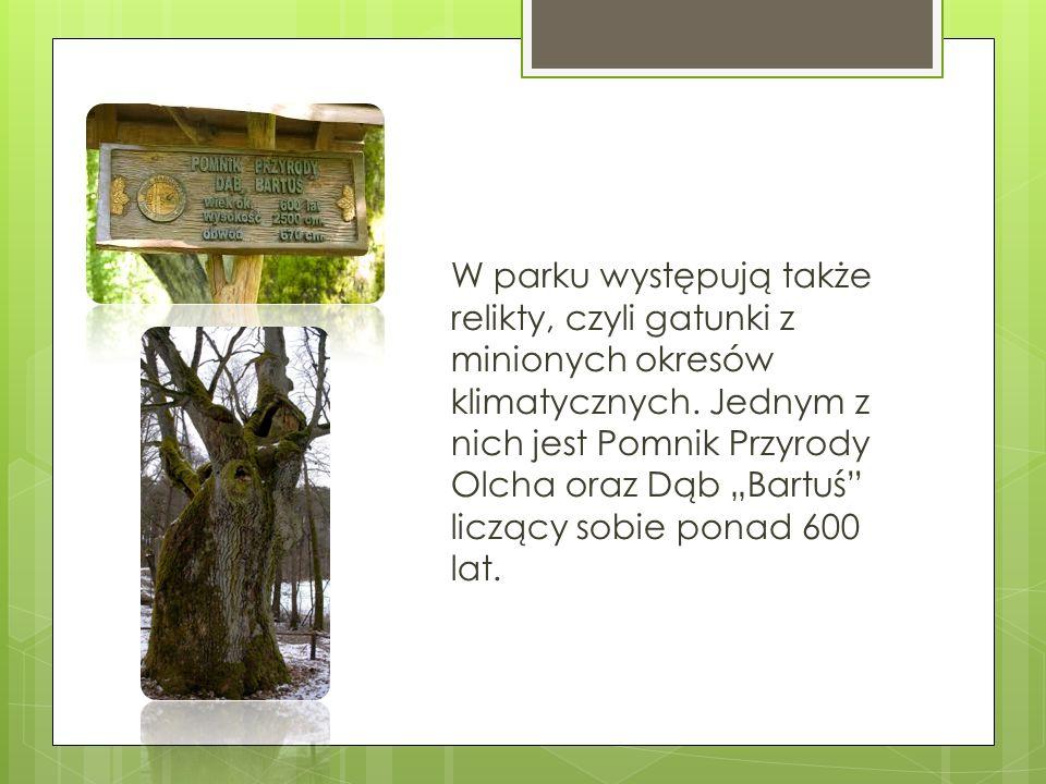 W parku występują także relikty, czyli gatunki z minionych okresów klimatycznych.