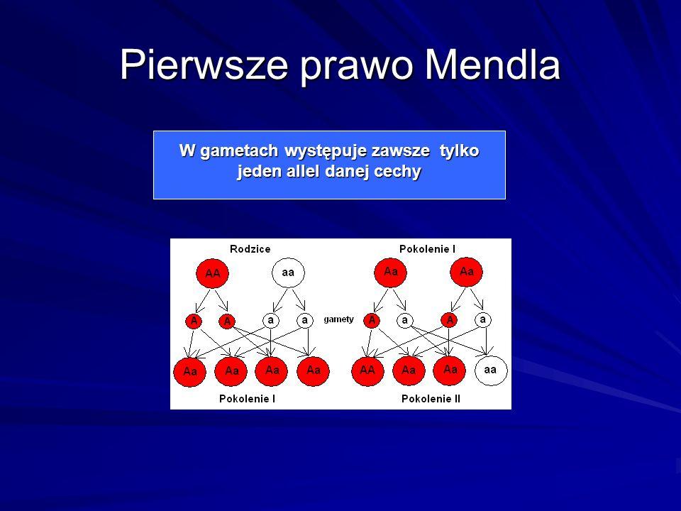 W gametach występuje zawsze tylko jeden allel danej cechy