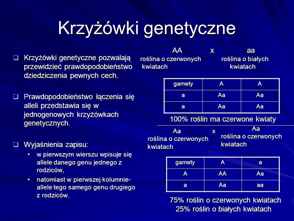 Krzyżówki genetyczne AA x aa