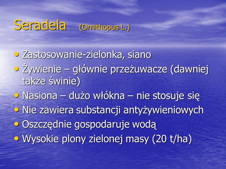 Seradela (Ornithopus L.)