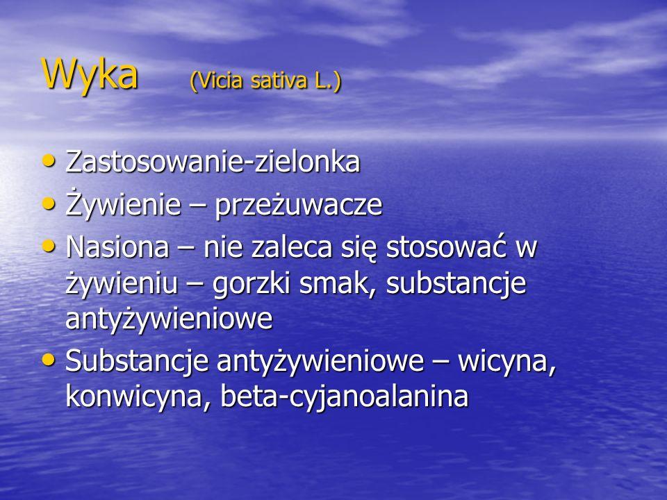 Wyka (Vicia sativa L.) Zastosowanie-zielonka Żywienie – przeżuwacze