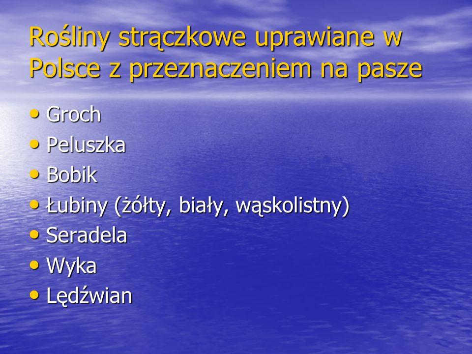 Rośliny strączkowe uprawiane w Polsce z przeznaczeniem na pasze