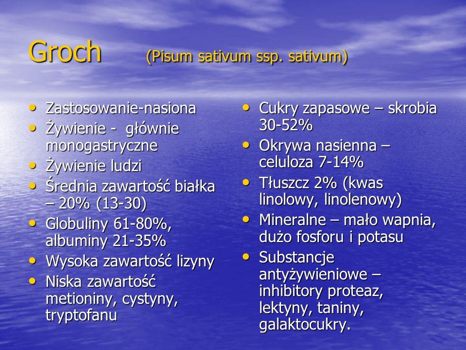 Groch (Pisum sativum ssp. sativum)