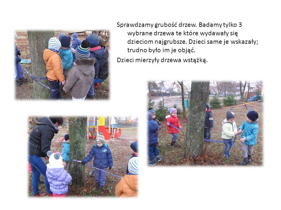 Sprawdzamy grubość drzew