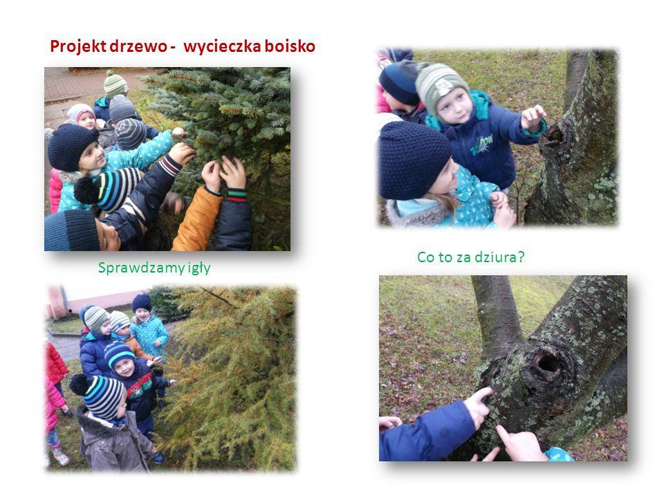 Projekt drzewo - wycieczka boisko