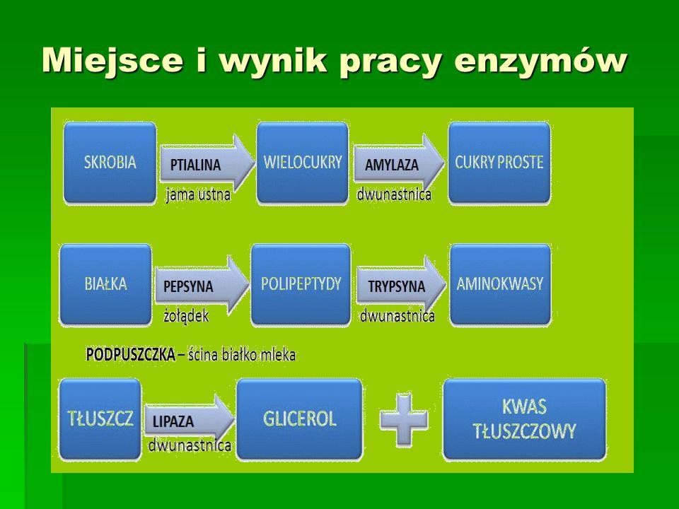 Miejsce i wynik pracy enzymów