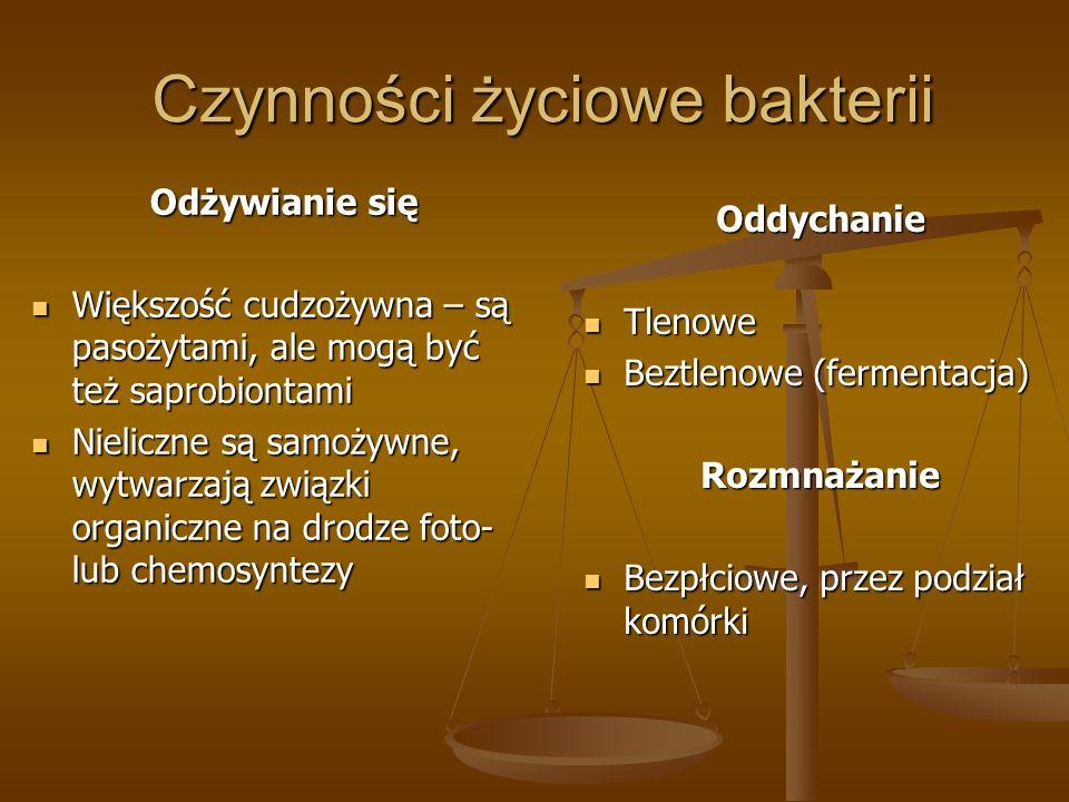Czynności życiowe bakterii