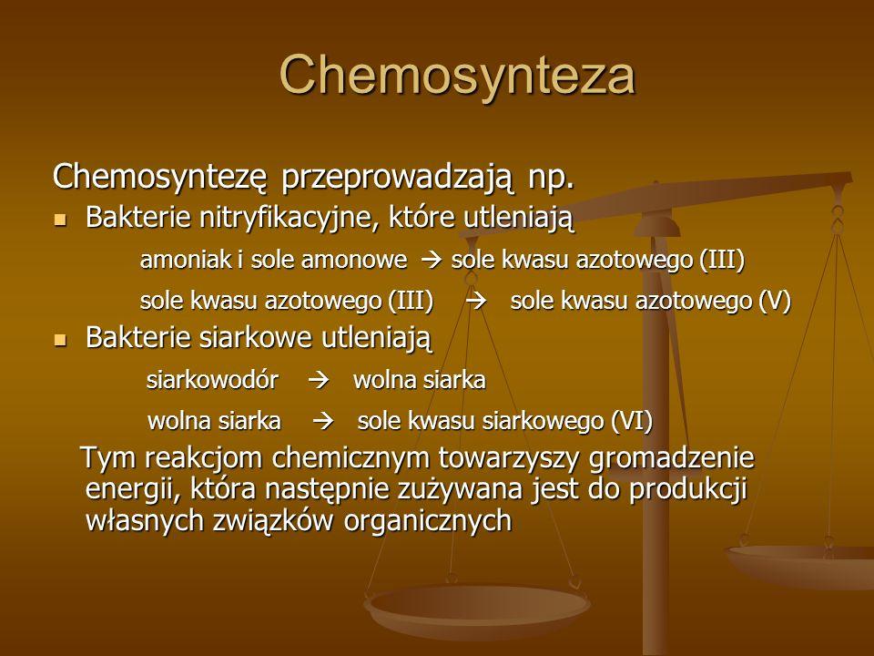 Chemosynteza Chemosyntezę przeprowadzają np.