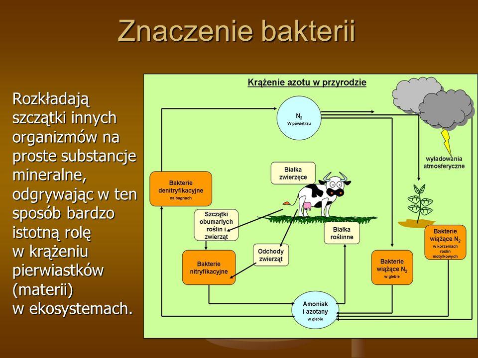 Znaczenie bakterii