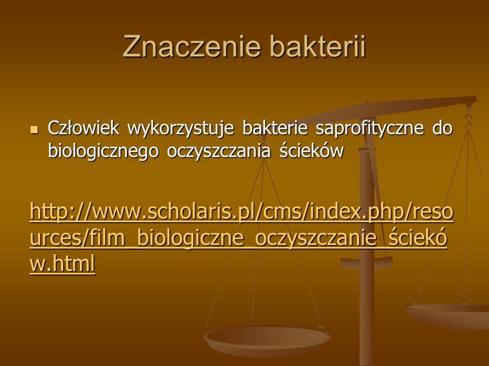 Znaczenie bakterii Człowiek wykorzystuje bakterie saprofityczne do biologicznego oczyszczania ścieków.