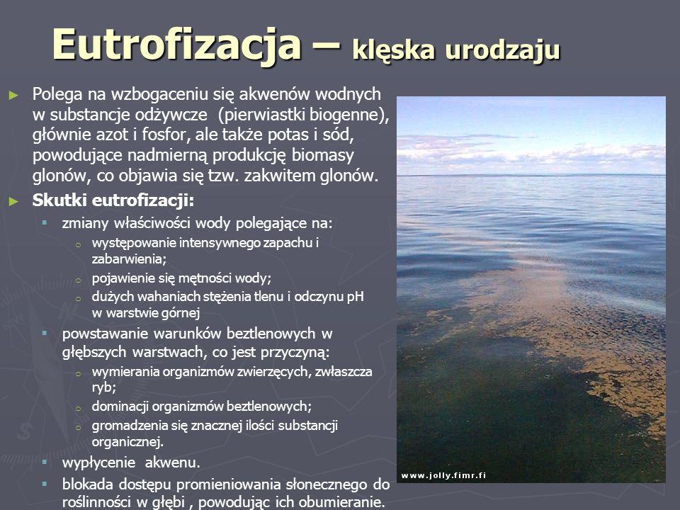 Eutrofizacja – klęska urodzaju