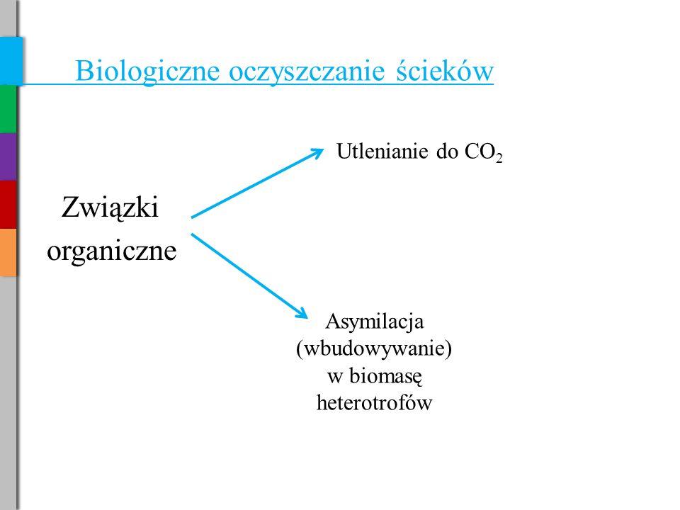 Asymilacja (wbudowywanie) w biomasę heterotrofów