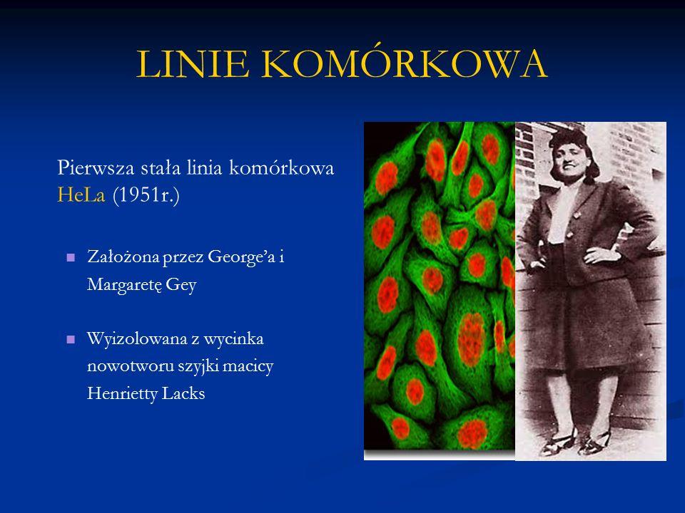 LINIE KOMÓRKOWA Pierwsza stała linia komórkowa HeLa (1951r.)