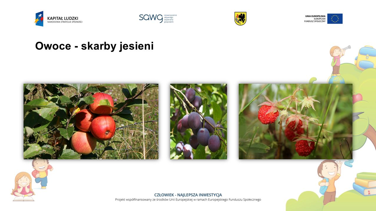 Owoce - skarby jesieni
