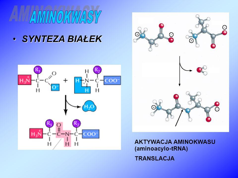 AMINOKWASY SYNTEZA BIAŁEK AKTYWACJA AMINOKWASU (aminoacylo-tRNA)