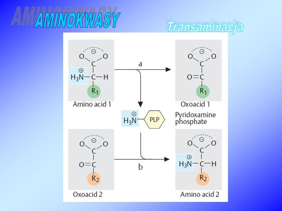 AMINOKWASY Transaminacja
