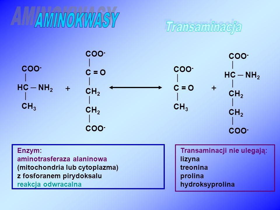 AMINOKWASY Transaminacja + + COO- COO-   C = O HC ─ NH2 COO- COO- 