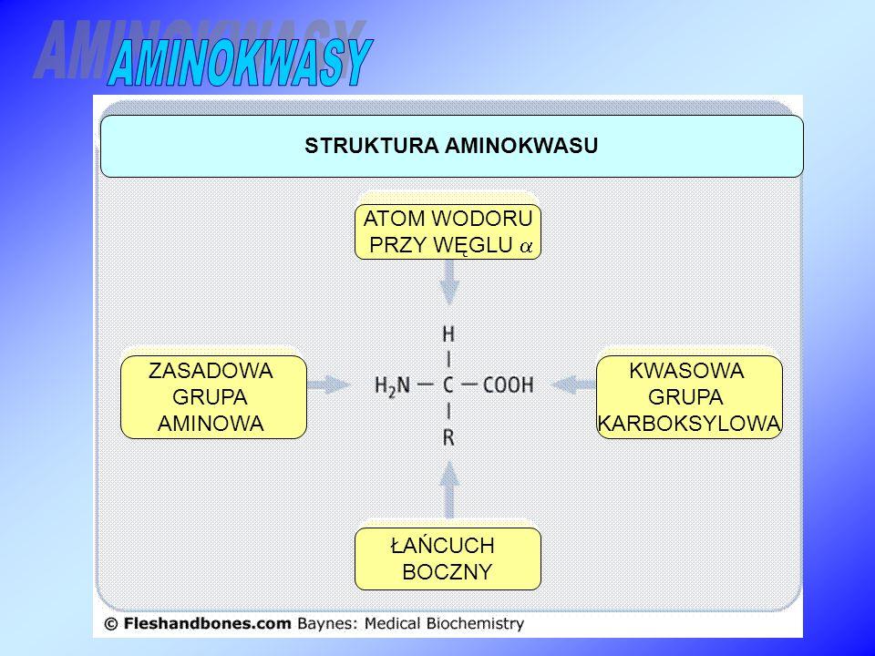 AMINOKWASY STRUKTURA AMINOKWASU ATOM WODORU PRZY WĘGLU  ZASADOWA