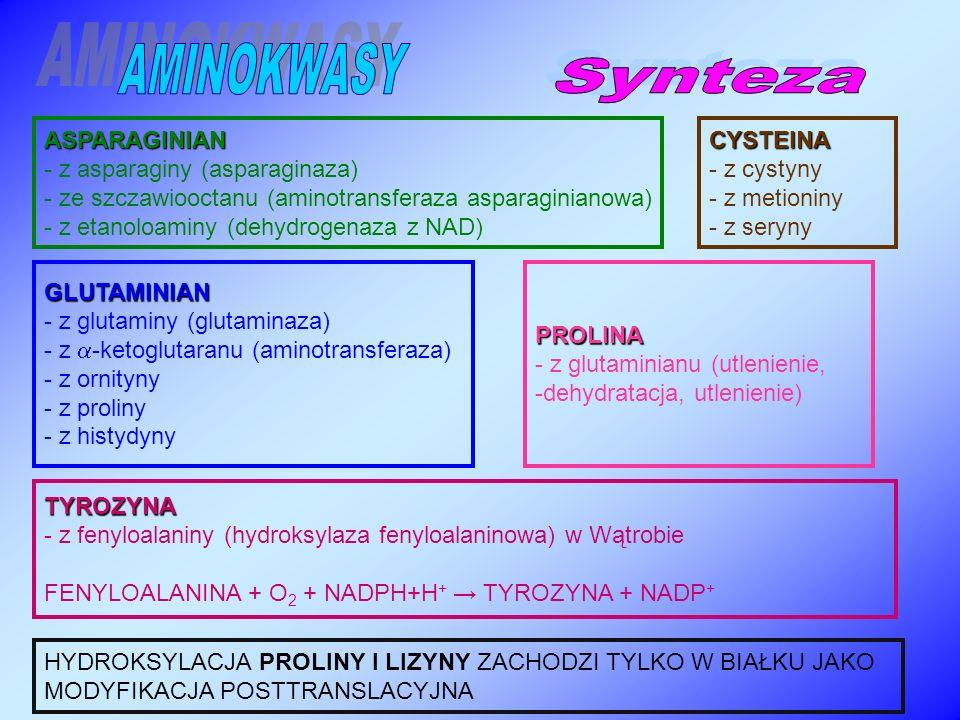 AMINOKWASY Synteza ASPARAGINIAN - z asparaginy (asparaginaza)
