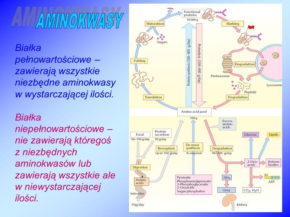 AMINOKWASY Białka pełnowartościowe – zawierają wszystkie niezbędne aminokwasy w wystarczającej ilości.