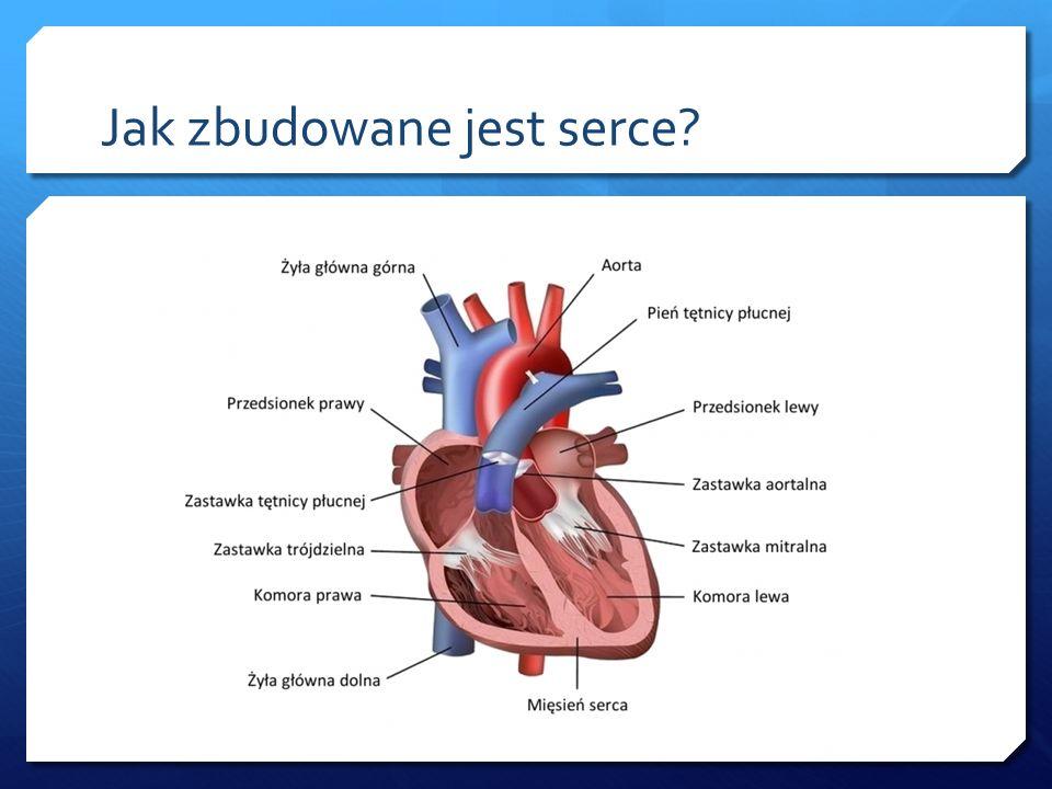 Jak zbudowane jest serce