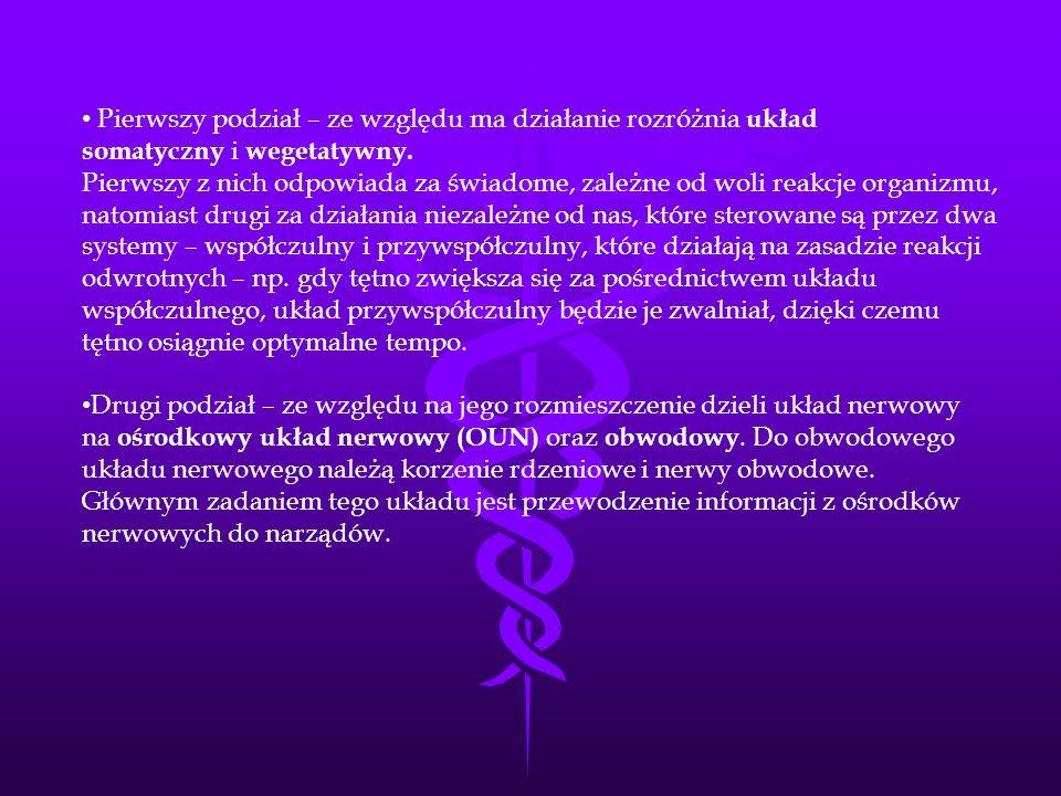 Pierwszy podział – ze względu ma działanie rozróżnia układ somatyczny i wegetatywny.