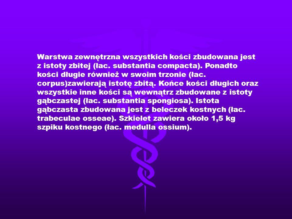 Warstwa zewnętrzna wszystkich kości zbudowana jest z istoty zbitej (łac.