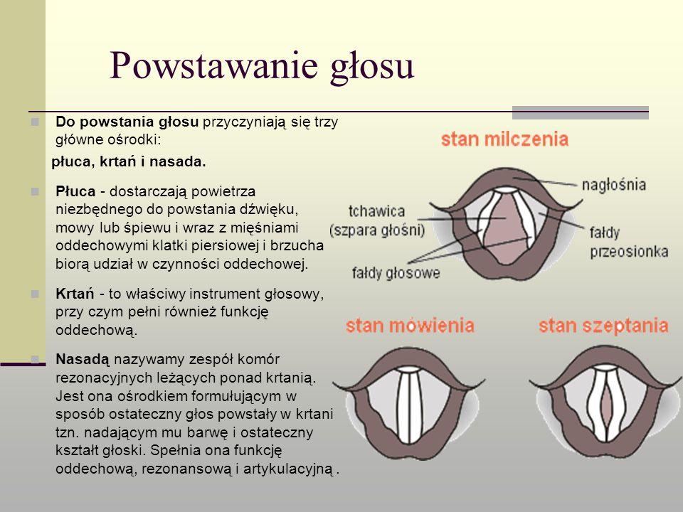Powstawanie głosu Do powstania głosu przyczyniają się trzy główne ośrodki: płuca, krtań i nasada.