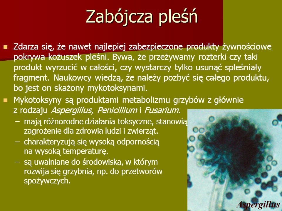 Zabójcza pleśń Aspergillus