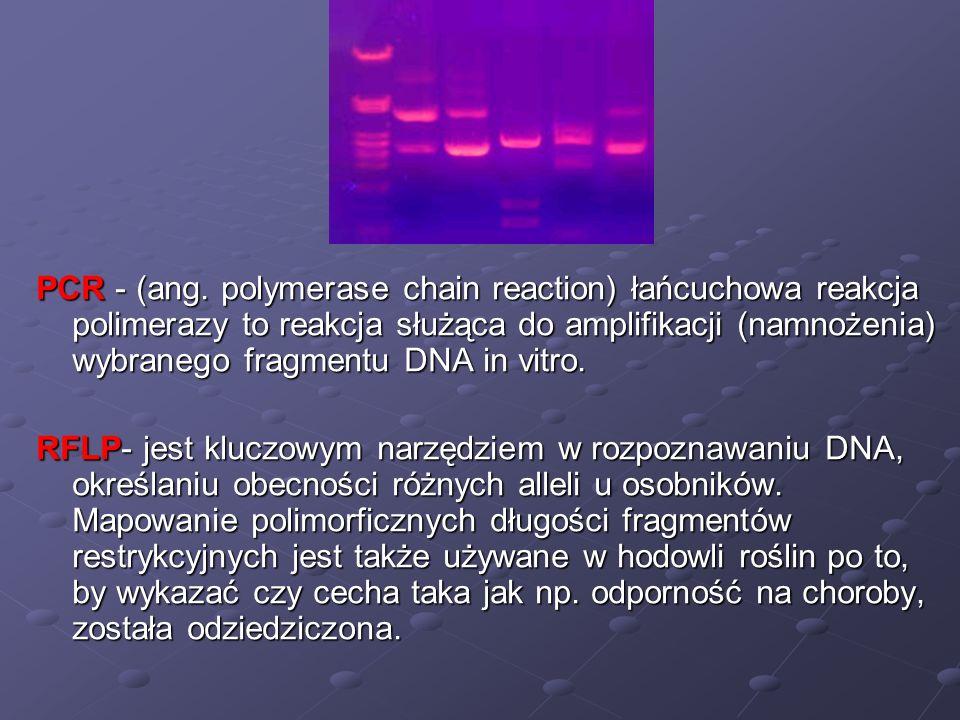 PCR - (ang. polymerase chain reaction) łańcuchowa reakcja polimerazy to reakcja służąca do amplifikacji (namnożenia) wybranego fragmentu DNA in vitro.