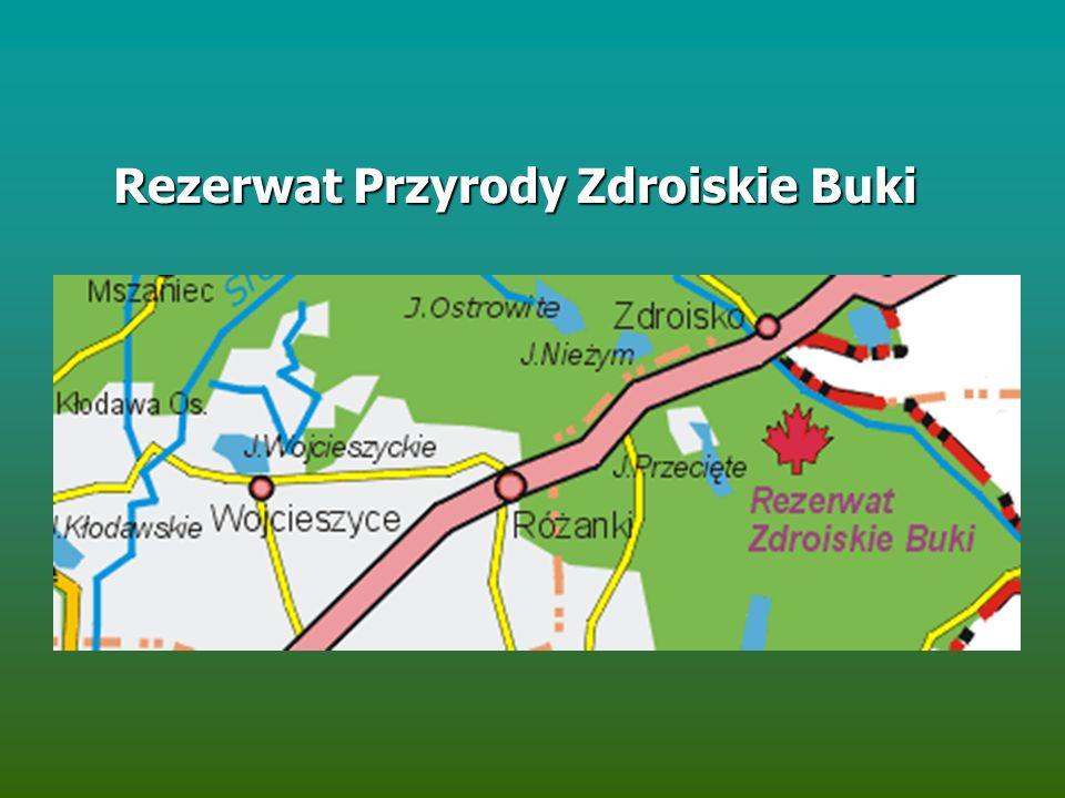 Rezerwat Przyrody Zdroiskie Buki