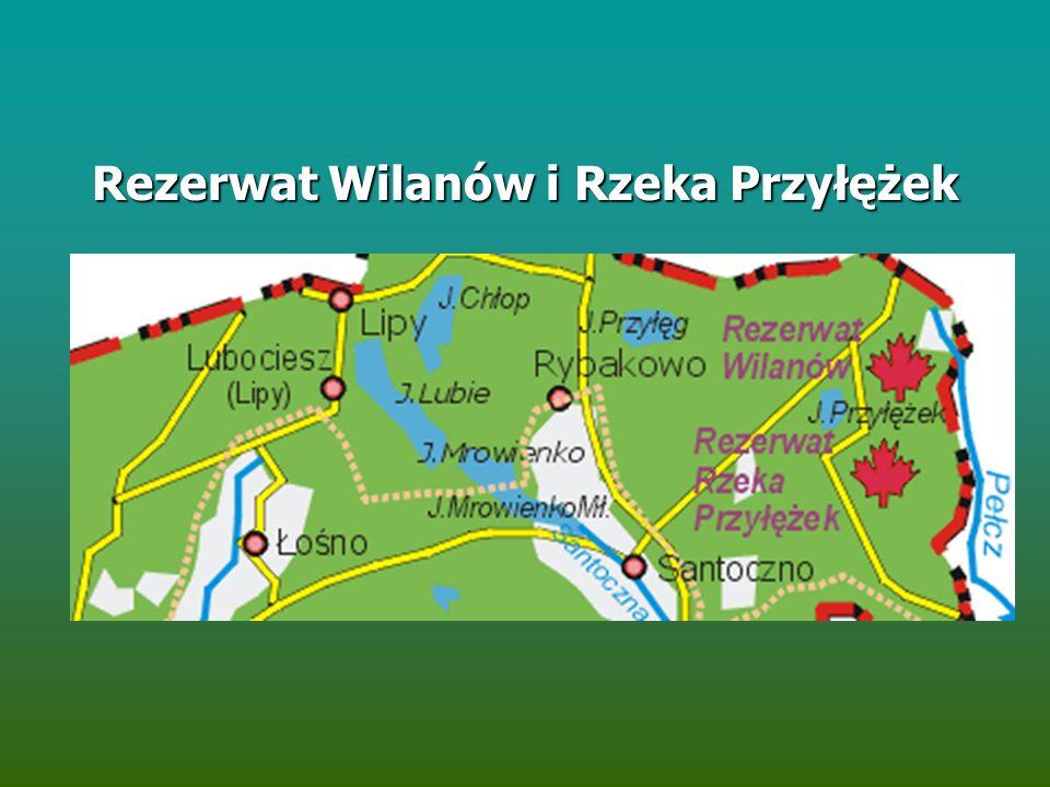 Rezerwat Wilanów i Rzeka Przyłężek