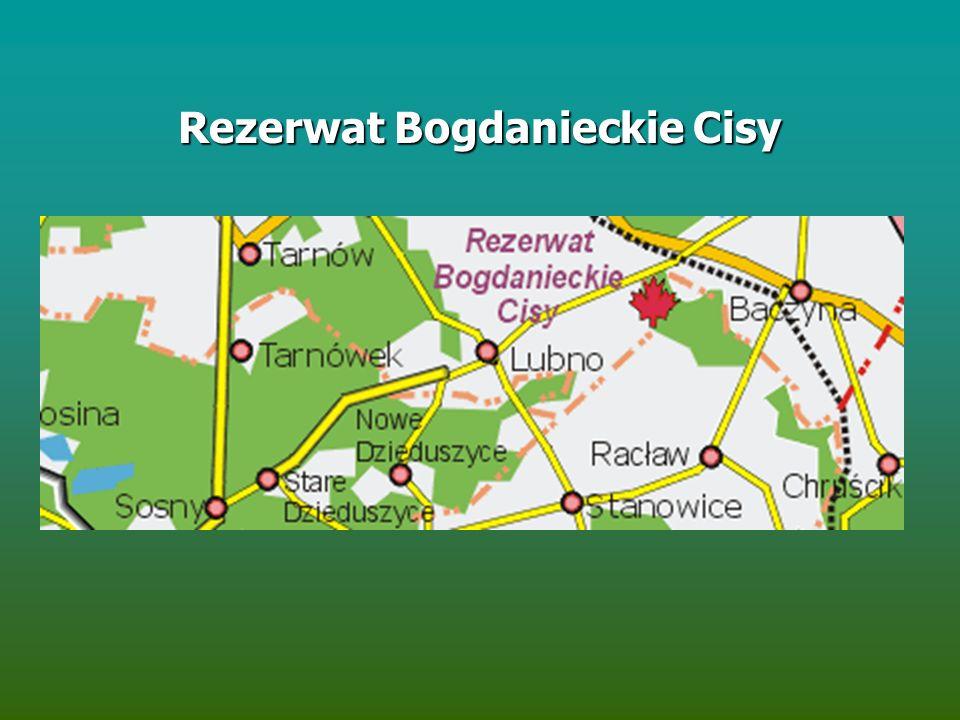 Rezerwat Bogdanieckie Cisy