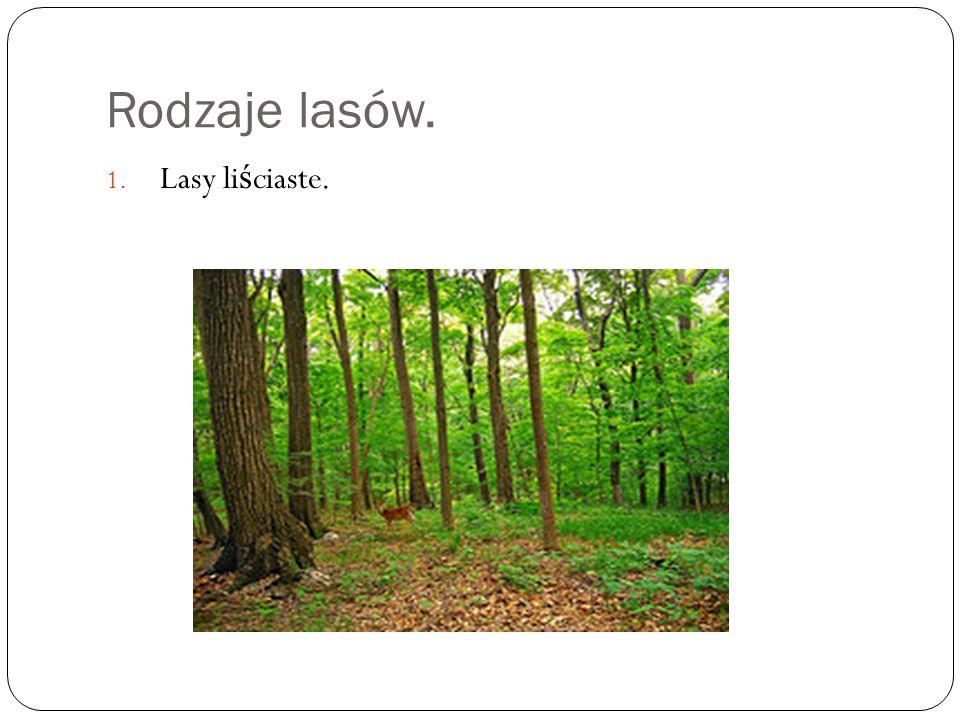 Rodzaje lasów. Lasy liściaste.