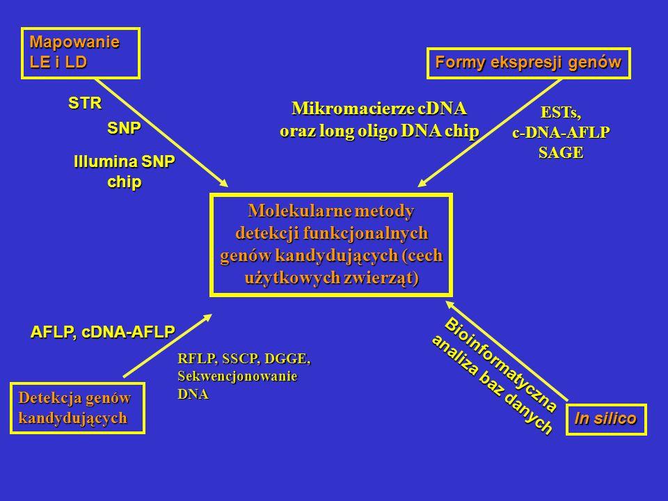 Mikromacierze cDNA oraz long oligo DNA chip