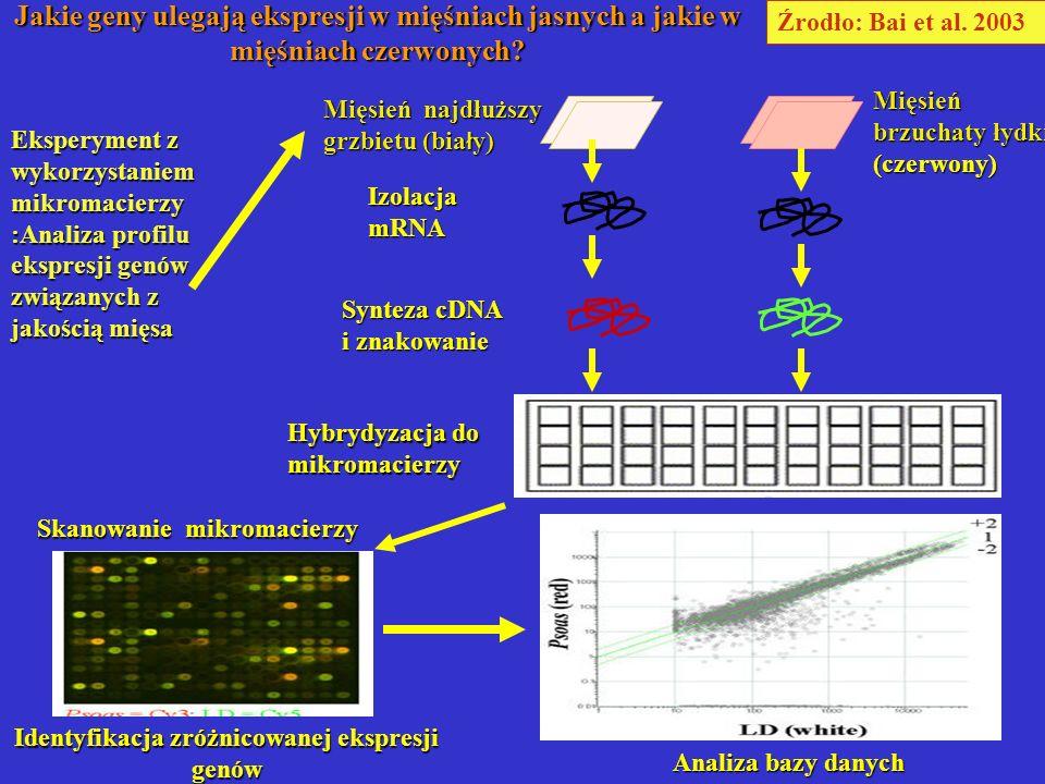 Identyfikacja zróżnicowanej ekspresji genów
