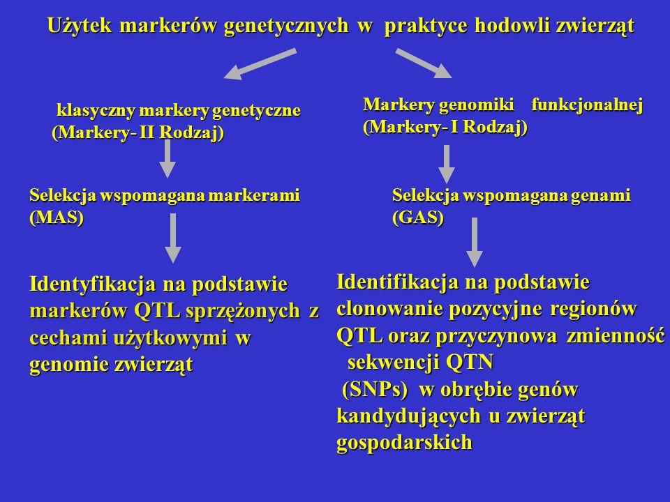 Użytek markerów genetycznych w praktyce hodowli zwierząt