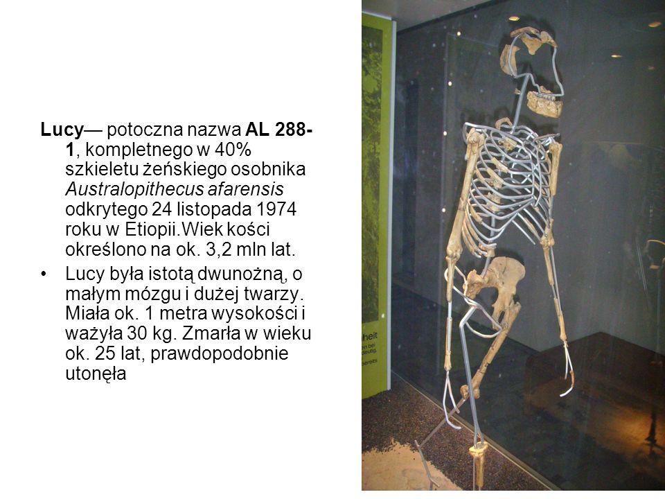Lucy— potoczna nazwa AL 288-1, kompletnego w 40% szkieletu żeńskiego osobnika Australopithecus afarensis odkrytego 24 listopada 1974 roku w Etiopii.Wiek kości określono na ok. 3,2 mln lat.