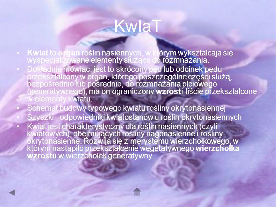 KwIaT Kwiat to organ roślin nasiennych, w którym wykształcają się wyspecjalizowane elementy służące do rozmnażania.