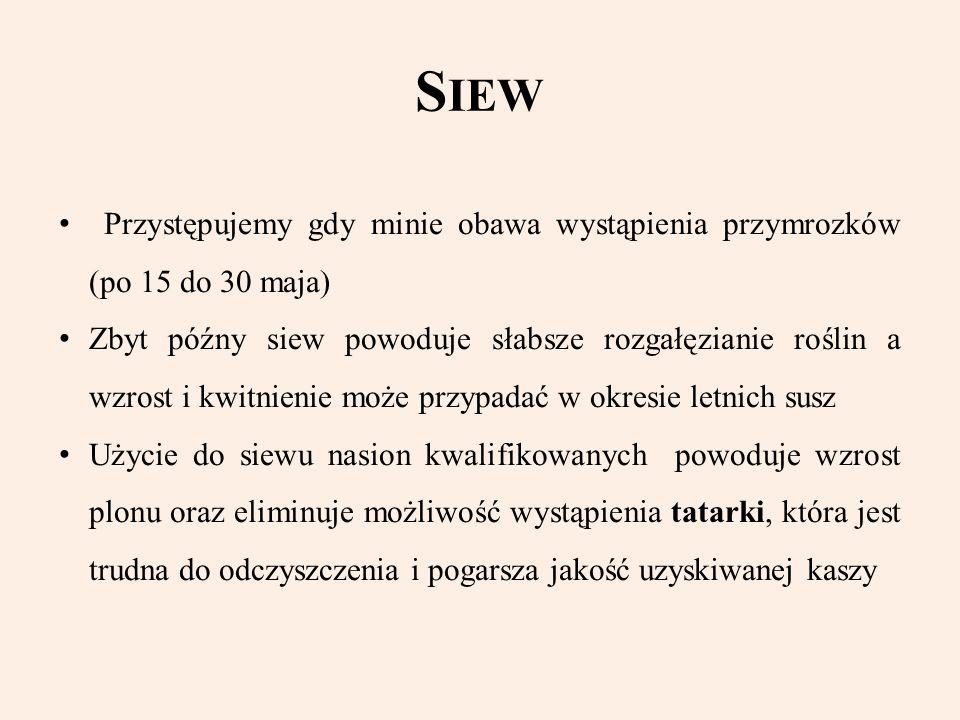 Siew Przystępujemy gdy minie obawa wystąpienia przymrozków (po 15 do 30 maja)