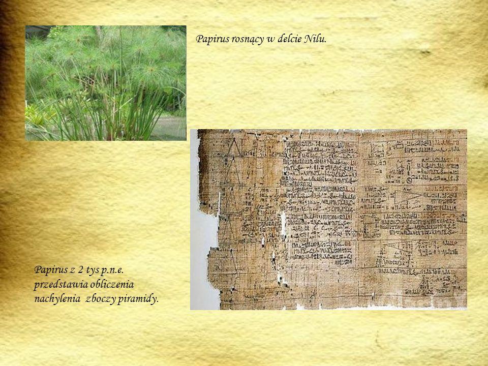 Papirus rosnący w delcie Nilu.
