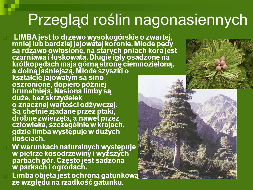 Przegląd roślin nagonasiennych