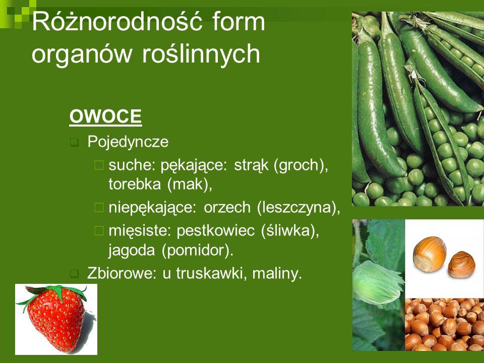 Różnorodność form organów roślinnych