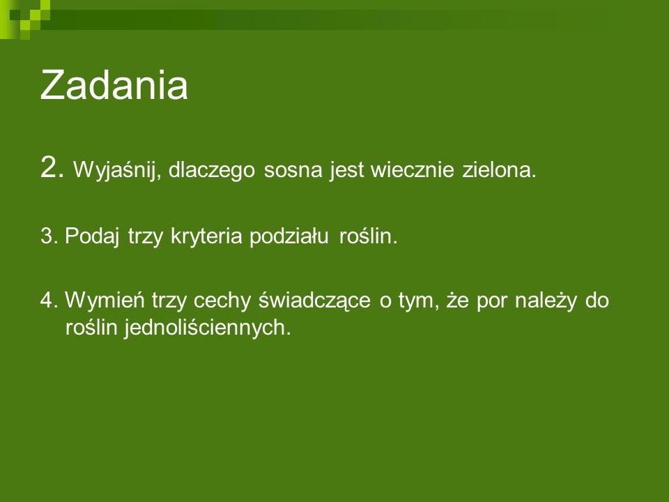 Zadania 2. Wyjaśnij, dlaczego sosna jest wiecznie zielona.