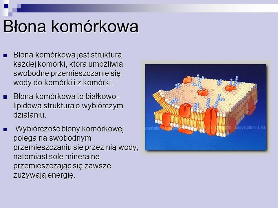 Błona komórkowa Błona komórkowa jest strukturą każdej komórki, która umożliwia swobodne przemieszczanie się wody do komórki i z komórki.