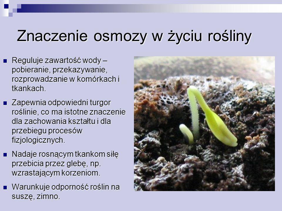 Znaczenie osmozy w życiu rośliny