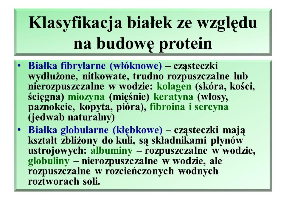 Klasyfikacja białek ze względu na budowę protein