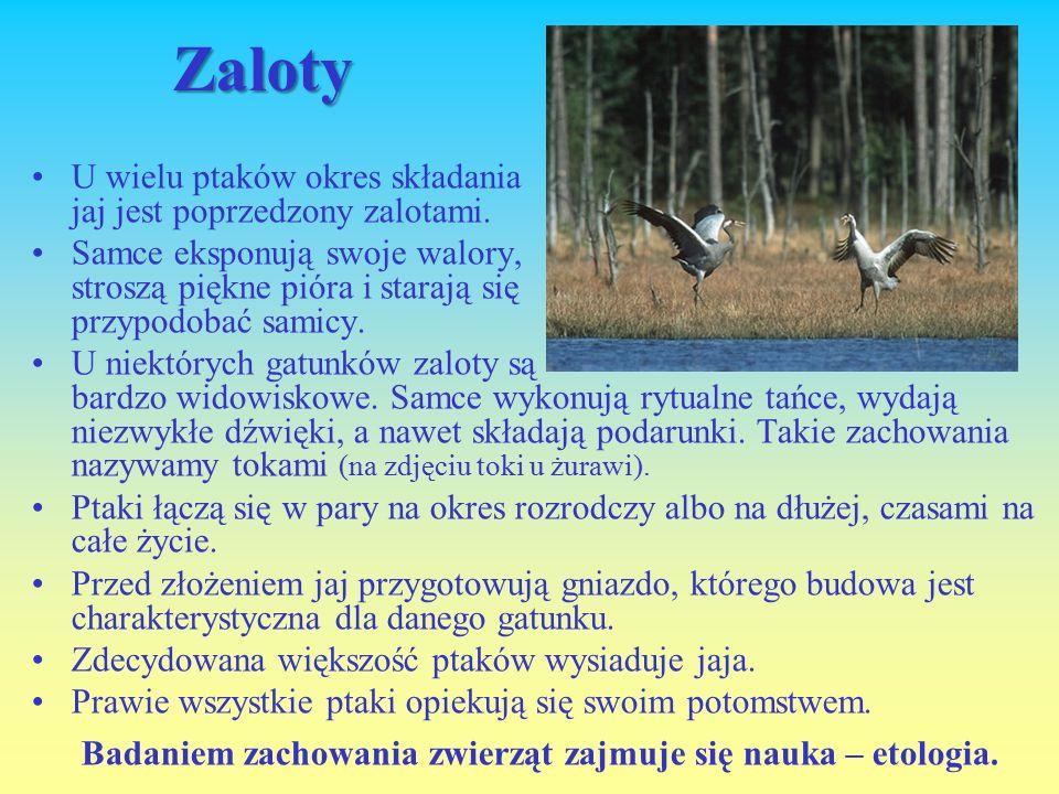 Badaniem zachowania zwierząt zajmuje się nauka – etologia.